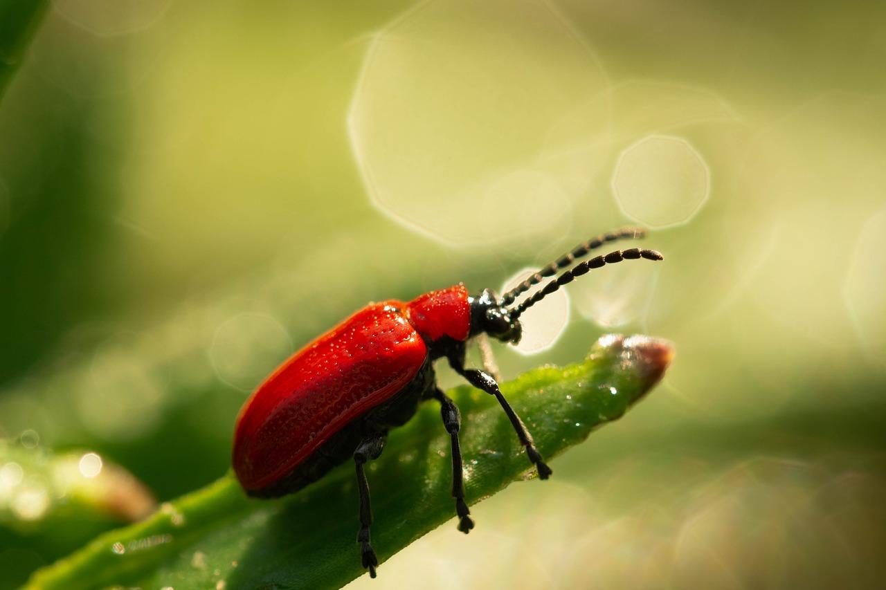 Problemy z insektami