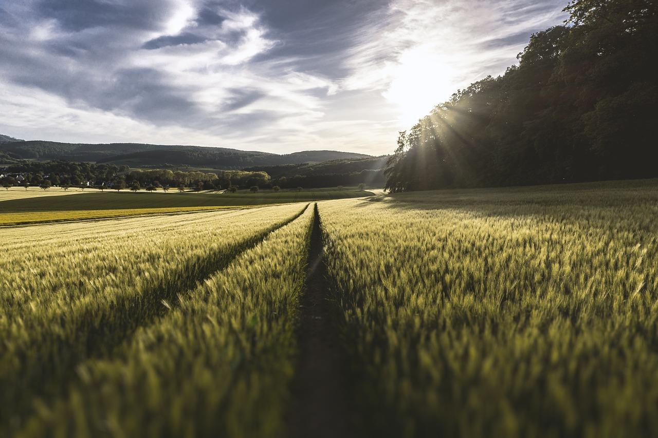 Środki chwastobójcze dla ogrodu i rolnictwa