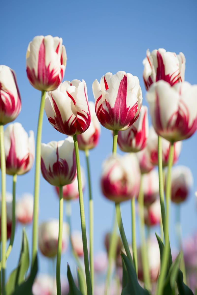 Jak wygodnie pozyskać sztuczne kwiaty?