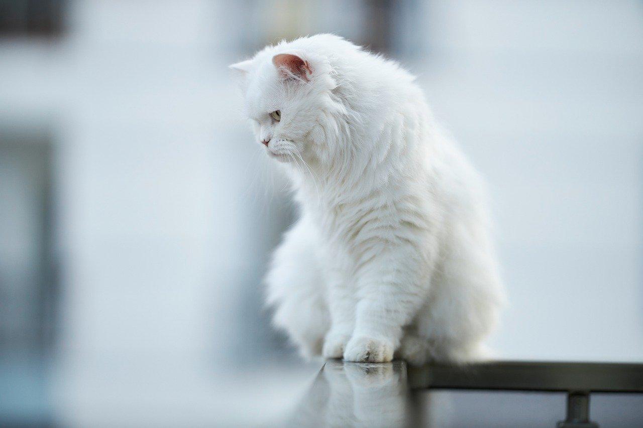 Skuteczne zabezpieczenia balkonów dla kotów
